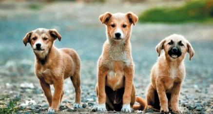 Zakon o zaštiti životinja – zakonske obaveze skrbnika pasa