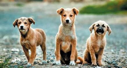 Obavijest o kontroli obveznog mikročipiranja pasa